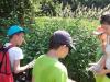 taborniski-pohod-izdelava-herbarija-susenje-cajev-9-large